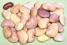 Er Beans