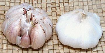 Garlic Hardneck Softneck