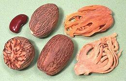 Nutmeg Family